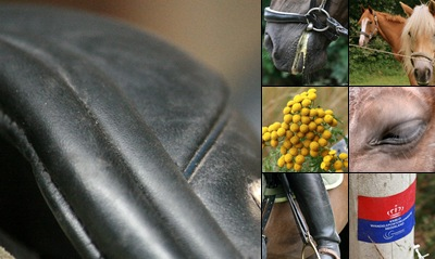 View Paarden - Close-ups - Details