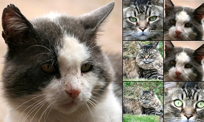 View Katten - Close-ups